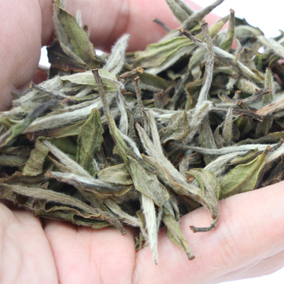 福鼎白茶2018年点头梅山高山白牡丹王散茶散装福建茶叶500克