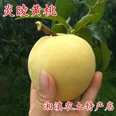 炎陵黄桃现摘现发10斤装红心桃子新鲜水果高山锦绣桃子