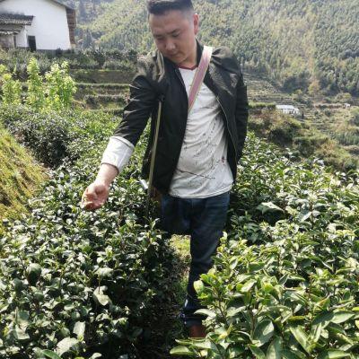 2020年新茶高山红茶红茶茶叶正宗桐木关高山茶特级浓香型
