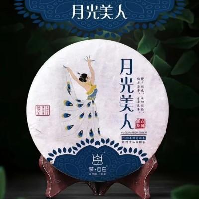 月光美人古树白茶是云南大叶种茶中的古老茶树乔木品种