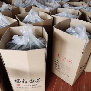 福鼎白茶2017采摘自大白茶树老白茶