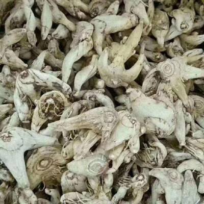白芨磨粉吃:支气管咳嗽吃白芨非常好功效对咳血吐血外伤出血疮痛肿毒。
