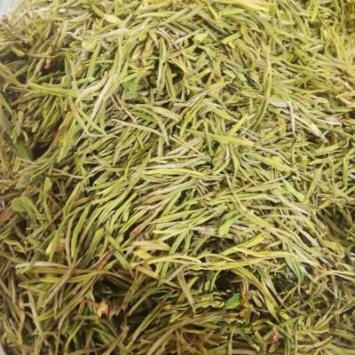 安吉特产白茶手工黄金牙2020新茶高端礼盒装罐装黄金芽绿茶叶500克