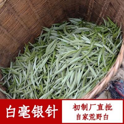 云南初制厂直销普洱景谷大白茶单芽大芽头白毫银针月光白美人散茶500g