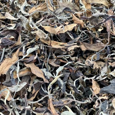 普洱白茶【2020年景迈古树白茶】散茶一斤装 买三送一