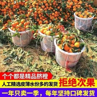 现摘脐橙重庆脐橙橙子当季水果新鲜包邮橙子鲜脐橙重庆带箱3-3.2斤