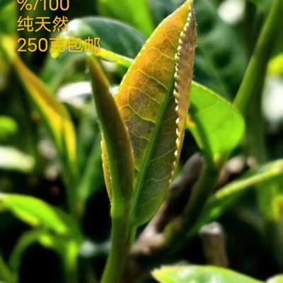 250克包邮正宗安溪铁观音2020新茶