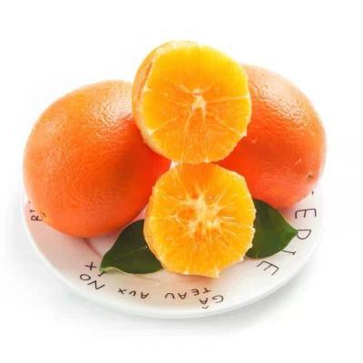 现摘脐橙重庆脐橙橙子当季水果新鲜包邮橙子鲜脐橙重庆带箱9-10斤特大果