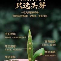 『2015贡眉私藏茶』350克/饼。历经多年的自然转化。