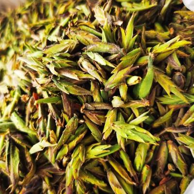 2021年永德大雪山古树野生白茶芽孢500克特级白茶