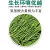 安吉白茶2021新茶正宗春茶绿茶雨前特级茶叶500克