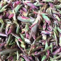 2021大雪山野生普洱紫芽苞