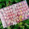 2021年春新茶正山小种红茶茶叶  正宗浓香型300g泡袋装