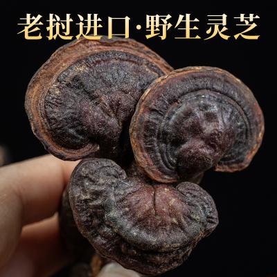 灵芝老挝野生天然药材正品干货非袍子灵芝粉滋补品小叶红灵芝王