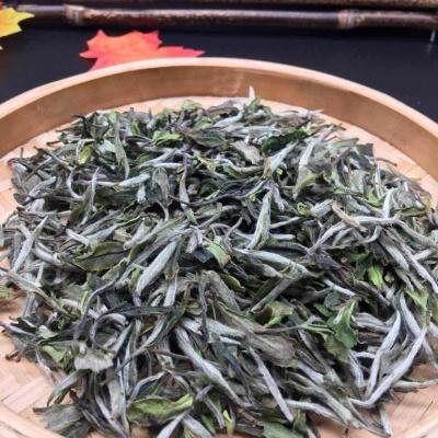 白茶牡丹王