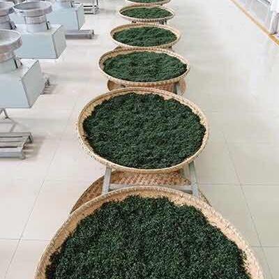 贵州凤冈锌硒茶,云雾绿茶95一斤