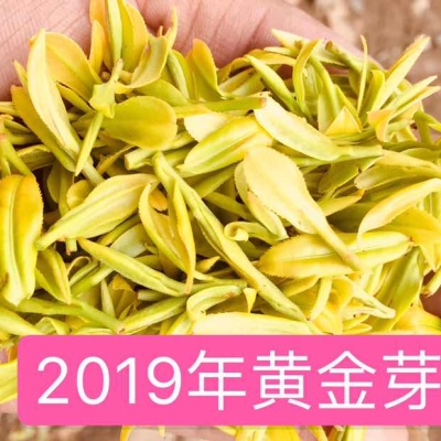 2019新茶黄金芽黄茶黄金叶安吉白茶雨前茶 特级黄金茶 250g