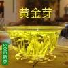 2019新茶黄金芽黄茶黄金叶安吉白茶雨前特级250g