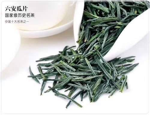 六安瓜片顶级有机绿茶 历史悠久