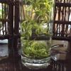 2019年安吉白茶 高山茶叶春茶白茶散装绿茶250g新茶.