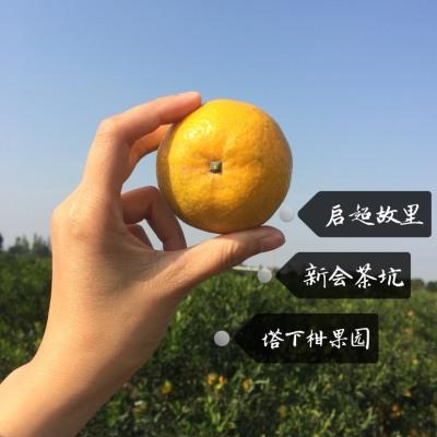2018年新会大红陈皮8年老树