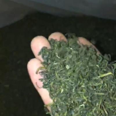 2019凤冈锌硒有机茶,口感清香回味无穷正宗云雾绿茶60元一斤500克