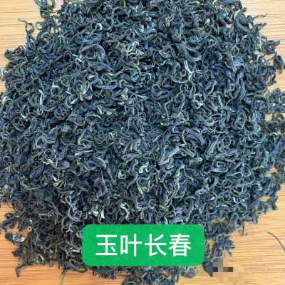 高山手工茶毛尖绿茶玉叶长春