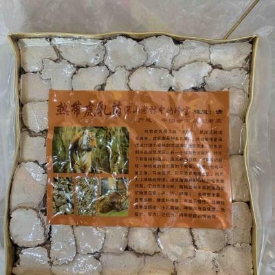 热带虎奶菌。
