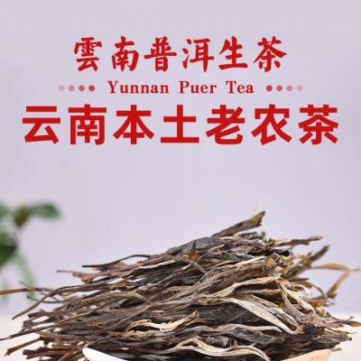 云南本土百年老树  普洱生茶