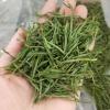 安吉白茶2021新茶春茶250g散装茶叶正宗高山绿茶