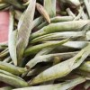 单芽白茶、头春头芽。一杯茶掉进花园子里。500g/220