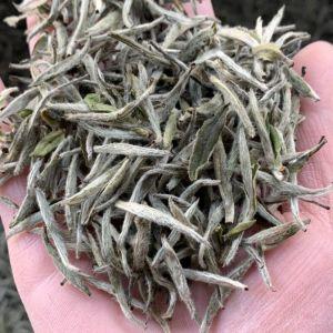 福鼎太姥山白茶,2018高山牡丹王,收藏价值高,价格合理🍵