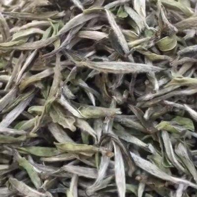2019年牡丹王,太姥山大毫料,芽头饱满,毫香、花香浓郁,极具收藏价值