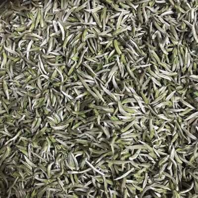 2020年明前首采福鼎白茶米粒芽