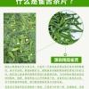 雀舌碎茶片2020新茶 湄潭翠芽贵州绿茶明前特级春茶碎片口粮茶
