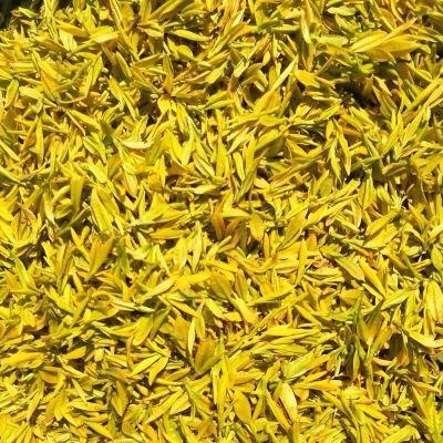 黄金芽茶叶2020年新茶上市安吉白茶250g明前茶特级黄金牙白茶茶叶
