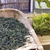 山东日照绿茶2020新茶茶散装炒青袋装板栗香特级春茶
