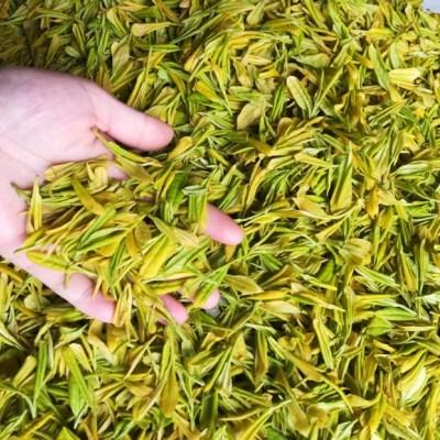 2020新茶,黄金芽250g