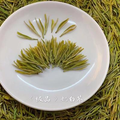 安吉奶白茶2020新茶叶黄金芽 明前特级安吉白茶黄金奶白茶叶