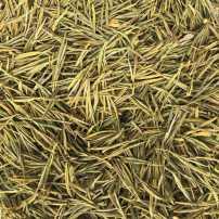 特价 安吉原产地黄金叶 黄金茶 顺丰包邮 简装250克 图片实物5小包