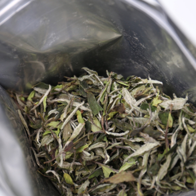 2020年 太姥山核心产区高级白牡丹青草香 茶水超甜 500克
