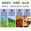 鸭屎香凤凰单枞茶潮州乌岽高山春茶清香型500克正宗特级高品质单丛茶