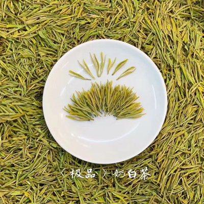 极品安吉奶白茶2021头春新茶黄金芽 明前特级安吉白茶黄金奶白茶叶