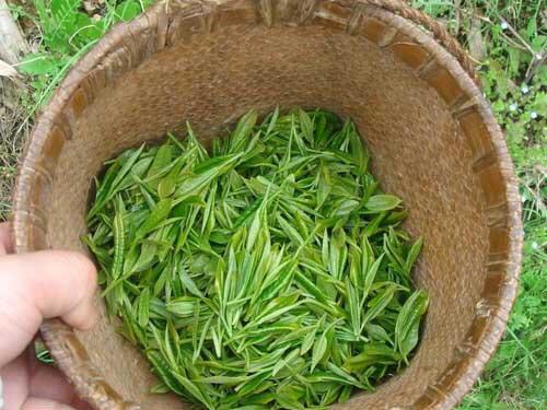 毛峰,2020年新茶,口感纯正,现在新店开业做活动,最低价,