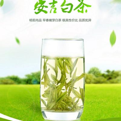 安吉白茶一斤,2020年新茶,高山茶树,茶农直销,放心购买。