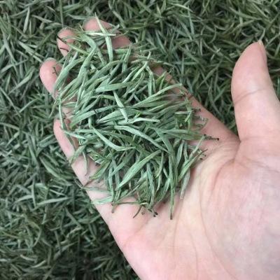 今年明前新茶普洱茶白毫银针 散装特级单芽大白芽 景谷大白毫茶250g