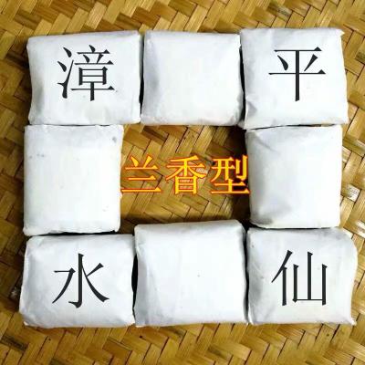 2020年新茶漳平水仙茶兰花香厂家批发,高山乌龙茶老枞 500克