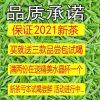 雀舌2021年新茶毛尖绿茶特级峨眉山明前春茶散装竹叶毛峰茶叶50g
