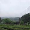 正山小种红茶茶叶浓香型武夷山新茶小种 散装 小袋装500g
