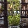 安吉白茶2021新茶春茶250g散装茶叶正宗高山茶